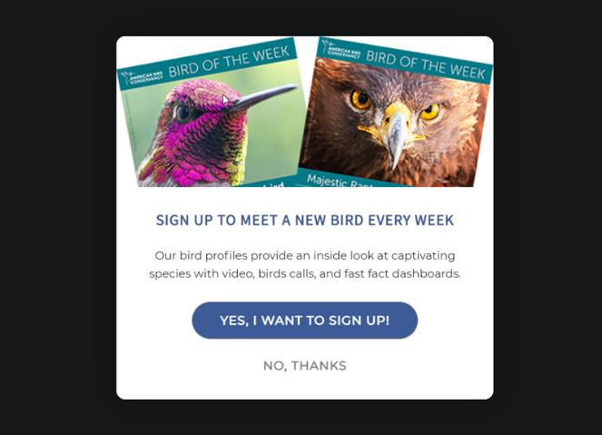 bird of the week lead magnet